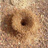 おすすめアリ駆除グッズ7選!蟻の巣まで退治・撃退スプレー・殺虫剤