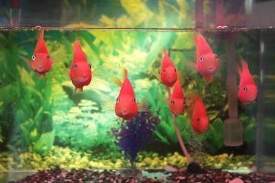 熱帯魚 飼育 稚魚